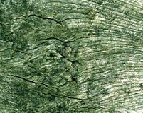 Alte grüne Baumschnittbeschaffenheit Stockfotografie