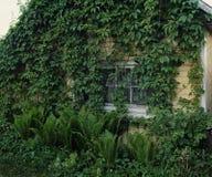 alte Grünpflanzedorfspätholzwand des Hausfensters lizenzfreie stockfotografie