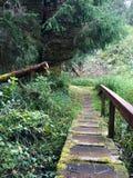 Alte grasartige Brücke im Wald Lizenzfreie Stockfotografie