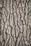 Alte graue Barke des Baums Lizenzfreie Stockfotos