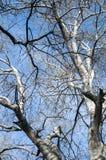 Alte große Baumaste Stockbilder