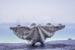 Alte große weiße Oberteile auf dem Holz, unscharfer blauer Seehintergrund lizenzfreie stockfotos