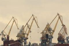 Alte gru nel porto del carico Immagine Stock Libera da Diritti