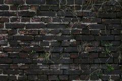 Alte grungy Beschaffenheit, graue Betonmauer mit Moos Stockfotos