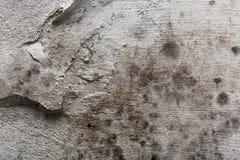 Alte grungy Betonmauerbeschaffenheit für Hintergrund und Design Lizenzfreies Stockbild