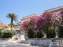 Alte Häuser und Blumenbäume in Dubrovnik Lizenzfreies Stockfoto