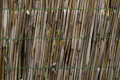 Alte hölzerne Bambusstruktur stockfotografie