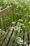 Alte hölzerne Bank mit wilden Blumen Stockbild