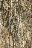 Alte hölzerne Barkenbeschaffenheit im Freien Stockbild