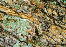 Alte hölzerne Barkenbeschaffenheit mit grüner Flechte und Sprüngen Brettoberfläche des rohen Holzes rustic Lizenzfreie Stockfotos
