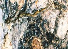 Alte hölzerne Barkenbeschaffenheit mit Sprüngen Brettoberfläche des rohen Holzes Lizenzfreie Stockfotografie