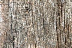 Alte hölzerne Baum-Beschaffenheit Lizenzfreie Stockfotografie