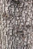 Alte hölzerne Baum-Beschaffenheit Lizenzfreies Stockbild