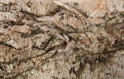 Alte hölzerne Baum-Beschaffenheit Stockbilder