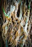 Alte hölzerne Baum-Beschaffenheit Lizenzfreie Stockfotos