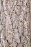 Alte hölzerne Baum-Beschaffenheit Stockbild