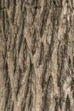 Alte hölzerne Baum-Beschaffenheit Lizenzfreie Stockbilder