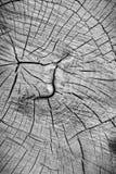 Alte hölzerne Baum-Ring-Beschaffenheit Stockfoto
