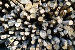 Alte hölzerne Baum-Ring-Beschaffenheit Stockbilder