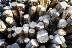 Alte hölzerne Baum-Ring-Beschaffenheit Stockbild