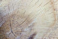 Alte hölzerne Baum-Ring-Beschaffenheit Lizenzfreie Stockfotos