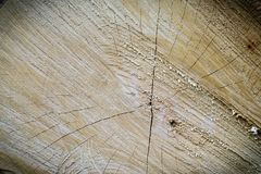 Alte hölzerne Baum-Ring-Beschaffenheit Stockfotografie