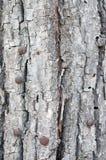Alte hölzerne Baumrinde Stockbild