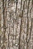 Alte hölzerne Baumrinde Stockbilder