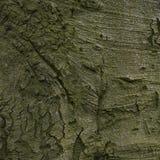 Alte hölzerne Baumrindebeschaffenheit Stockbilder