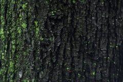 Alte hölzerne Baumrindebeschaffenheit mit grünem Moos Stockfotos