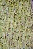 Alte hölzerne Baumrindebeschaffenheit mit grünem Moos Lizenzfreies Stockbild