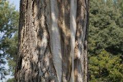 Alte hölzerne Baumrindebeschaffenheit mit grünem Moos Lizenzfreie Stockbilder