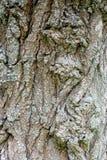 Alte hölzerne Baumrindebeschaffenheit mit grünem Moos Lizenzfreie Stockfotografie