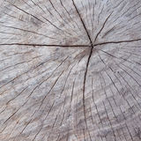 Alte hölzerne Baumstammbeschaffenheit oder -hintergrund Stockbild
