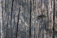 Alte hölzerne Beschaffenheit als natürliches Muster Lizenzfreies Stockbild