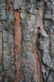 Alte hölzerne Beschaffenheit der Baumrinde Stockbilder