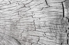 Alte hölzerne Beschaffenheit des Holzes im Zusammenhang Lizenzfreies Stockbild