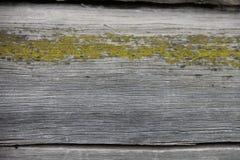Alte hölzerne Beschaffenheit des natürlichen Hintergrundes mit Moos Stockbild