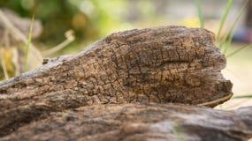 Alte hölzerne Beschaffenheit, starb Baum, toter Baum Stockbilder