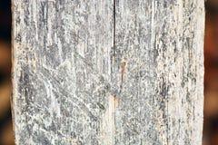 Alte hölzerne Hintergrundbeschaffenheit Hölzerner Hintergrund der Weinlese mit Knoten und Nagellöchern stockfotos