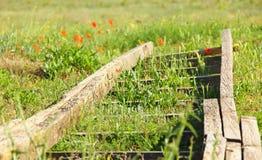 alte hölzerne Leiter, die auf dem Gras auf einer Wiese mit Mohnblumen liegt, Lizenzfreie Stockfotos