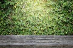Alte hölzerne Planken oder Bretterboden mit Betonmauer und Zierpflanzen Lizenzfreie Stockbilder