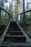 Alte hölzerne Promenade bedeckt mit Blättern im alten Wald Stockbilder