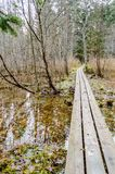 Alte hölzerne Promenade bedeckt mit Blättern im alten Wald Lizenzfreie Stockfotografie