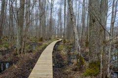 Alte hölzerne Promenade bedeckt mit Blättern im alten Wald Stockbild