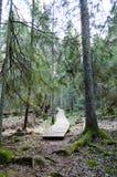 Alte hölzerne Promenade bedeckt mit Blättern im alten Wald Stockfoto