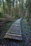 Alte hölzerne Promenade bedeckt mit Blättern im alten Wald Lizenzfreies Stockbild