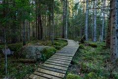 Alte hölzerne Promenade bedeckt mit Blättern im alten Wald Lizenzfreie Stockfotos