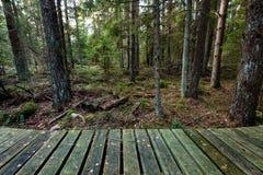 Alte hölzerne Promenade bedeckt mit Blättern im alten Wald Lizenzfreie Stockbilder