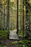 Alte hölzerne Promenade bedeckt mit Blättern im alten Wald Lizenzfreies Stockfoto
